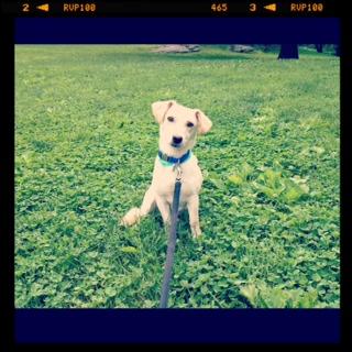 Wiley Takes Manhattan